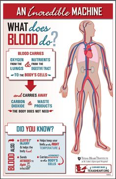 What does blood do?