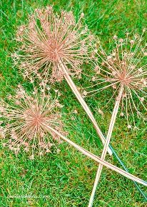 how to create gorgeous metallic painted dried giant allium flowers, crafts, gardening, how to, painting