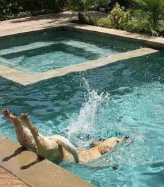 """""""I HAVE TO LOVE THIS POOL NOW, I GUESS.""""   16 Dogs Who Tried Their Best But Didn't Succeed"""