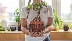 Škodcovia na izbových kvetinách – ako im predísť, spoznať ich azbaviť sa ich? Leather Backpack, Plants, Leather Backpacks, Plant, Planets