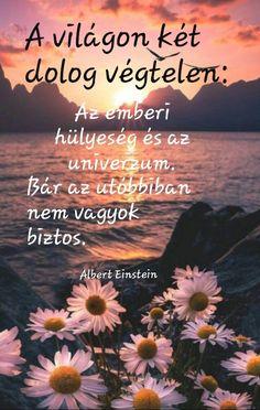 Einstein, Zen, Beach, Happy, Quotes, Outdoor, Quotations, Outdoors, The Beach