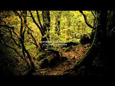Nature Sound 17 - THE MOST RELAXING SOUNDS - Rainforest