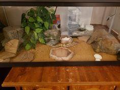 A simple leopard setup with 10 gallon tank Leopard Gecko Setup, Leopard Gecko Cage, Leopard Gecko Terrarium, Leopard Gecko Habitat, Reptile Room, Reptile Cage, Reptile Enclosure, Bearded Dragon Terrarium, Cute Lizard