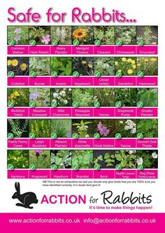 You could grow these in your aquaponics or garden for your rabbit.