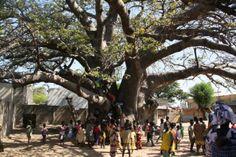 Découverte du Siné Saloum en voilier et en famille. Nous quittons Djirnda pour l'autre village du partenariat scolaire, Moundé.