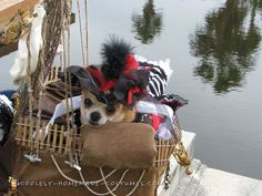 Pirates of the Caribbean costumes for dogs.