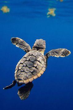 Summer Sun Sea Turtle Edisto Beach Youth T Shirt