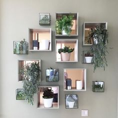 Combineer je planten met andere elementen en creëer zo een centerpiece aan je wand. Meer tips en inspiratie? Kijk op debotanist.nl/inspiratie