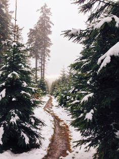 white & green, snowy forest path