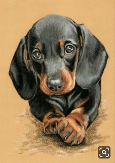 The Diverse Dachshund Breed - Champion Dogs Dachshund Breed, Dachshund Art, Dachshunds, Daschund, Boxer Dogs, Cute Drawings, Animal Drawings, Dog Drawings, Dog Artwork