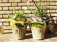 Urban Jungle Bloggers: My Plant Gang by hershelf.de