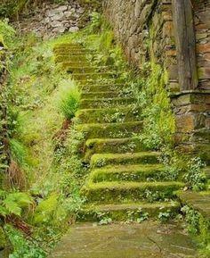 flores para escada de pedra - Pesquisa Google