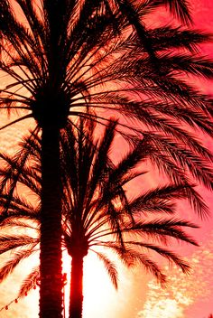 love and live. Beautiful sunset colors and palm trees Pink Sunset, Sunset Colors, Pink Sky, Summer Sunset, Pink Beach, Palm Tree Sunset, Palm Trees, Dame Nature, I Love The Beach