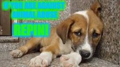 Please repin if you love dogs and animals and don't like how people abuse them!