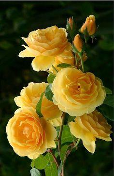 Apaixonados por flores - Comunidade - Google+