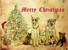TO ORDER: Please email izzy@soidog-foundation.org and PLEASE ensure you give your address and the number of cards you wish to purchase.  Introducing the new Soi Dog Christmas cards!  If you have any questions or wish to order, PLEASE EMAIL izzy@soidog-foundation.org https://www.facebook.com/SoiDogPageInEnglish/photos/pcb.800122086696195/800121950029542/?type=1&theater