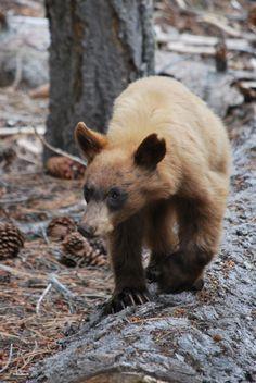 fuzzy wuzzy was a bear fuzzy wuzzy had no hair fuzzy wuzzy wasn