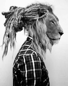 Just in love with this. Lion. °