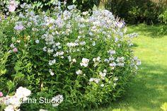 Rohtosuopayrtti Garden Inspiration, Google, Plants, Plant, Planets
