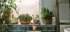 Conheça 10 jeitos lindos de ter plantas no banheiro (Divulgação)