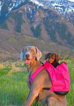 kutyak-hatizsakban-turaznak_8