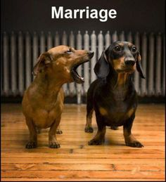 The Top 30 Dachshund photos that everyone needs to see