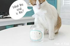 Make your own all natural cat deterrent spray to keep them from scratching your furniture or urinating in your home.