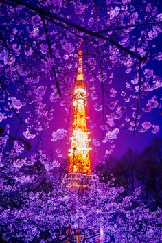 Tokyo Tower with Cherry Blossoms, Japan 桜 と 東京タワー Beautiful World, Beautiful Places, Beautiful Pictures, Beautiful Scenery, Cherry Blossom Japan, Cherry Blossoms, Japan Landscape, Tokyo Night, Tokyo Tower