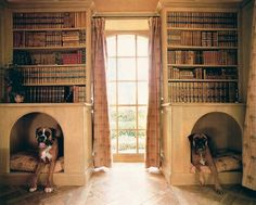 books and shelves and boxers! I know I know... everything I pin on here involves dogs!