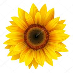 Sunflower Illustrations and Stock Art. Sunflower illustration graphics and vector EPS clip art available to search from thousands of royalty free clipart providers. Sunflower Drawing, Sunflower Flower, Sunflower Tattoos, Sunflower Design, Yellow Sunflower, Sunflower Clipart, Small Sunflower, Flower Wall, Flower Prints