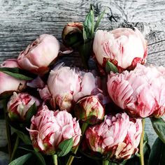 Peonies forever!