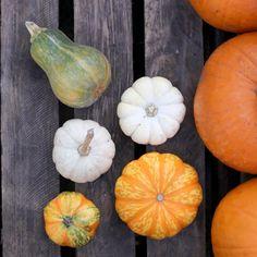 Pumpkins & Gourds.