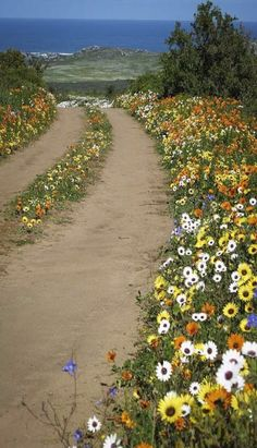 Floral path to the water