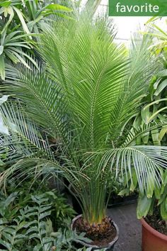 Tropical Landscape Designs that Brings Coolness to your Place Florida Landscaping, Tropical Landscaping, Landscaping With Rocks, Landscaping Plants, Front Yard Landscaping, Palm Garden, Ferns Garden, Tropical Garden Design, Tropical Plants