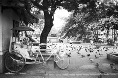 Chiang Mai Thailand AmyJoRoyall.com