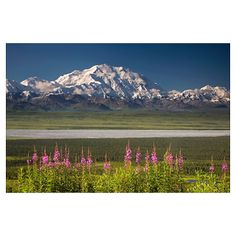 Poster store-----Mt. McKinley and the Alaska Range with fireweed fl Poster