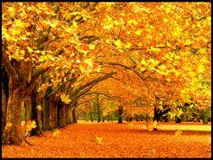 Картинки по запросу анимация падающие листья скачать бесплатно