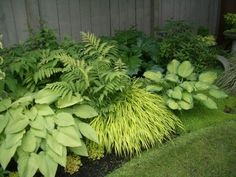 The combination of hostas, ferns and grasses in this photo provides layers of texture that create visual interest, even though there are no ...