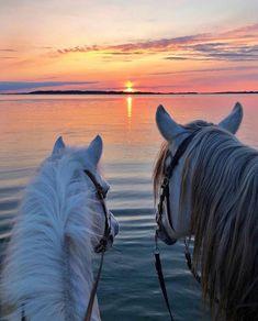 #horses #horseridingstyle #dream #sunset #sun #horselover #custom #crop #vintage