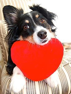 #Pets give us unconditional love <3 #Valentine