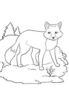 FREE Artic Fox Coloring Page For Kids. #winter Coloring Pages Hibernating  Animal Worksheet.