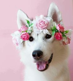 Wedding Photography Dog Flower Ideas For 2019 Animals And Pets, Baby Animals, Funny Animals, Cute Animals, Beautiful Dogs, Animals Beautiful, Cute Puppies, Cute Dogs, Tier Fotos