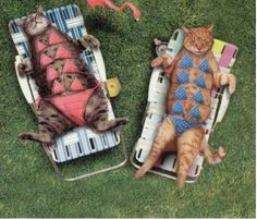 Modest Sunbathers - Funny Animal Pictures Crazy Cats, Funny Dogs brings daily updates of Funny Crazy Animals. Funny Cat Photos, Funny Animal Pictures, Funny Animals, Cute Animals, Crazy Animals, Funny Images, You Funny, Funny Cute, Funny Dogs