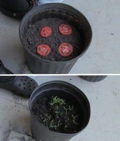 20 buenas imágenes de como plantar y germinar semillas!