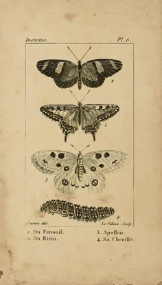 Butterfly-Ephemera-FridayFreebie-GraphicsFairy.jpg 1,024×1,800 pixels