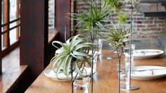 Tilly tablescape | Not confined to a container with potting soil, air plants lend themselves to creative arrangements indoors and even out