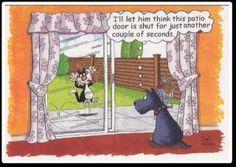 patio door :)