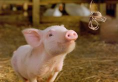 Photo Gallery of Pictures from Charlotte's Web (2006): Wilbur and Charlotte in Charlotte's Web