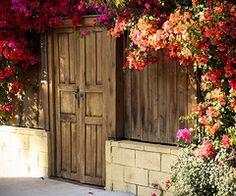 door and bougenvillia