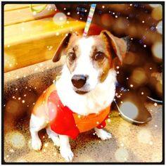 xmas dog. #cameranapp cute puppy